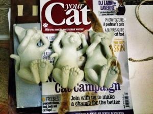 Cat monkeys